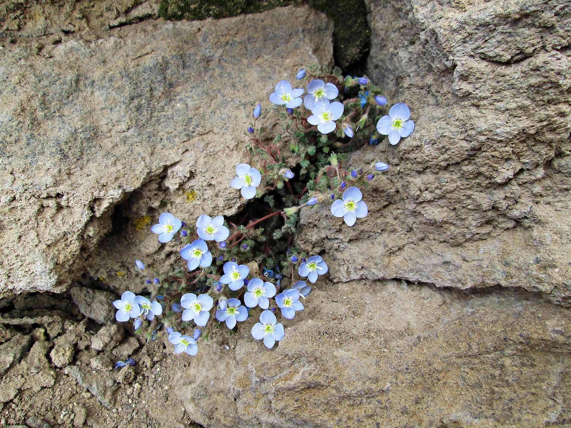 kwiatymod